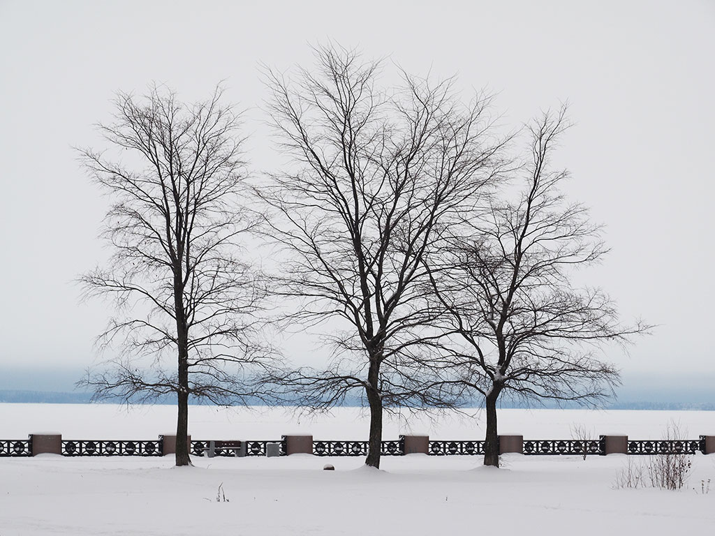 Τree on the shore of Plastira lake in winter